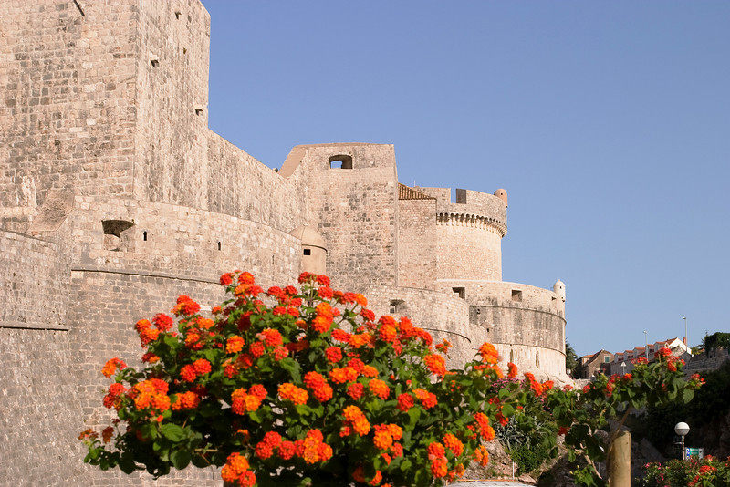 A view of the massive old stone city walls and fortifications of Dubrovnik viewed over some flowers in the foreground.