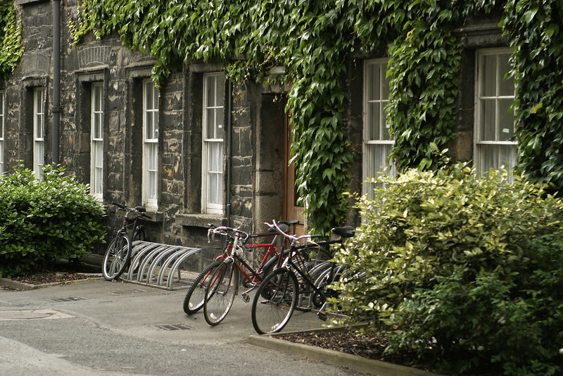 Three bicycles at a bike stand parked at Trinity College in Dublin in front of an ivy-covered building.