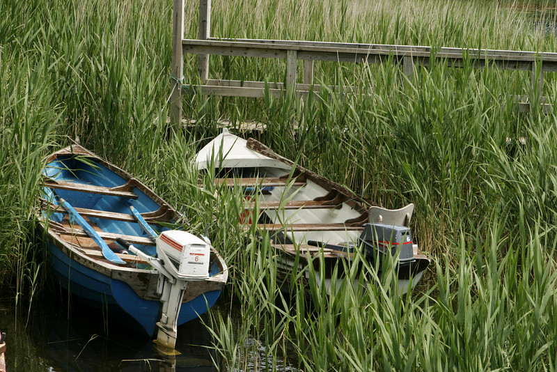 Two small boats with outboard engines are pulled ashore at the edge of a lake. The two skiffs are surrounded by marsh grass and reeds. The blue and white paint is peeling from the boatds.