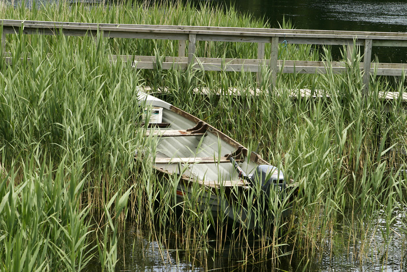 One small rowboat with and outboard engine is pulled ashore at the edge of a lake, partially surrounded by marsh grass and reeds. The white paint is peeling from the boat.