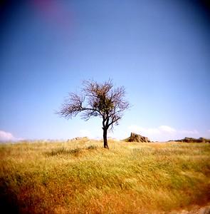 Tree, Kapadokya Turkey 2009