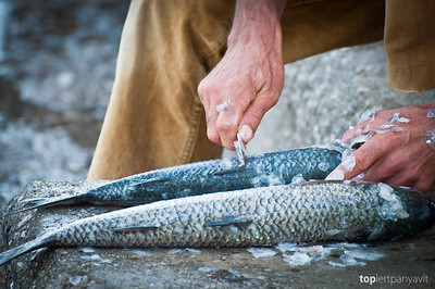 Fisherman descales the fish he caught
