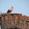 Stork watching over Selcuk