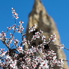 Spring blossoms at Goreme Open Air Museum