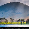 Europe - UK - United Kingdom - England - North West England - Cumbria - Lakes - Lake District National Park - Buttermere lake - Spectacular lake with row of iconic pine trees
