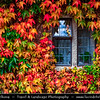 Europe - UK - United Kingdom - England - North West England - Cumbria - Lakes - Lake District National Park - Favorite holiday destination famous for its lakes & mountains (or fells) - Traditional house covered in autumn leaves