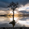 Europe - UK - Scotland - Loch Lomond & Trossachs National Park - Loch Lomond - Loch Laomainn - Freshwater Scottish loch lying on Highland Boundary Fault - Largest inland stretch of water in Great Britain by surface area - Milarrochy
