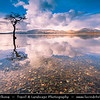 Europe - UK - Scotland - Loch Lomond & Trossachs National Park - Loch Lomond - Loch Laomainn - Freshwater Scottish loch lying on Highland Boundary Fault - Largest inland stretch of water in Great Britain by surface area - Lonely tree at Milarrochy