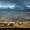 UK - Scotland - Highlands - Sutherland - Northern areas - Moine Thrust Belt - Foinaven - Classic glacier glen - Valley with sheep at stormy & snowy weather