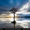 Europe - UK - Scotland - Loch Lomond & Trossachs National Park - Loch Lomond - Loch Laomainn - Freshwater Scottish loch lying on Highland Boundary Fault - Largest inland stretch of water in Great Britain by surface area - Milarrochy