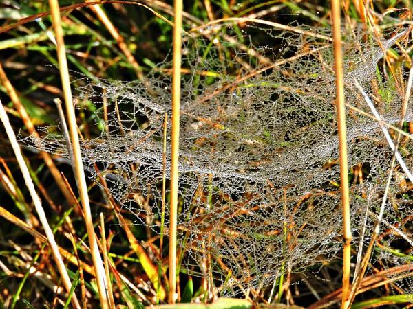 Sheet webs in a meadow