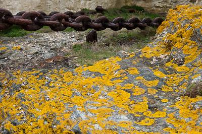 Lichen & Chain