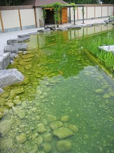 japanese_garden_04