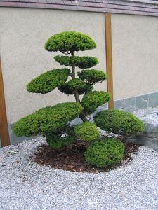 japanese_garden_08