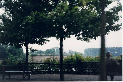 benches_and_trees