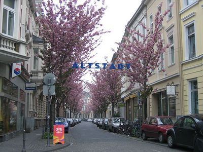 tree_lined_street