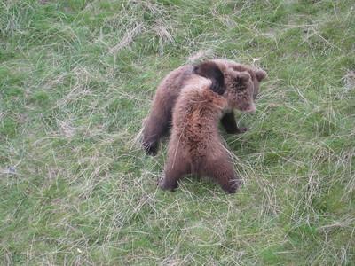 bears_07