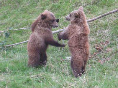 bears_10