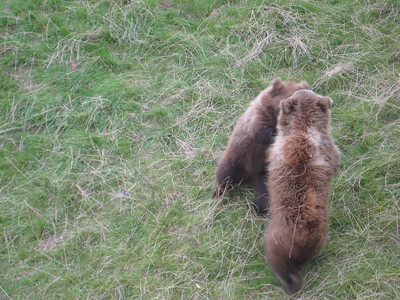 bears_06