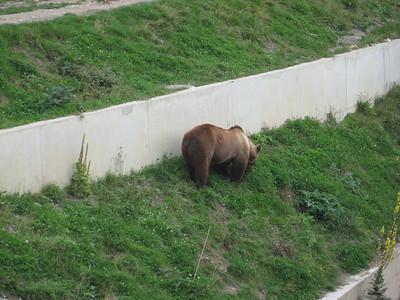 bears_01