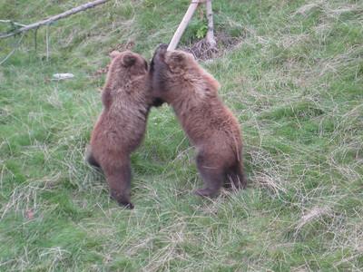 bears_09