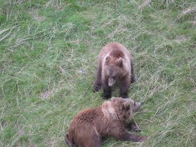 bears_05