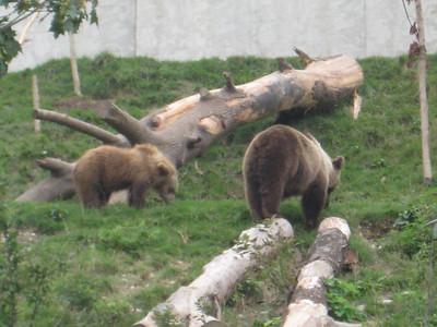 bears_03