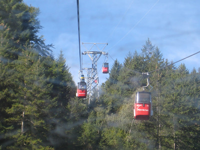 cable_cars_trees