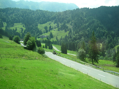 trees_road
