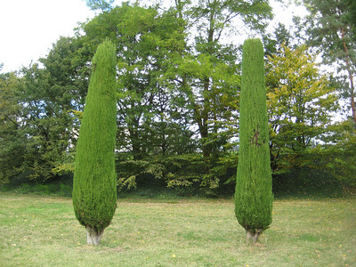twin_trees