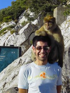 Joe_Monkey_1