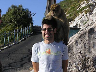 Joe_Monkey_2