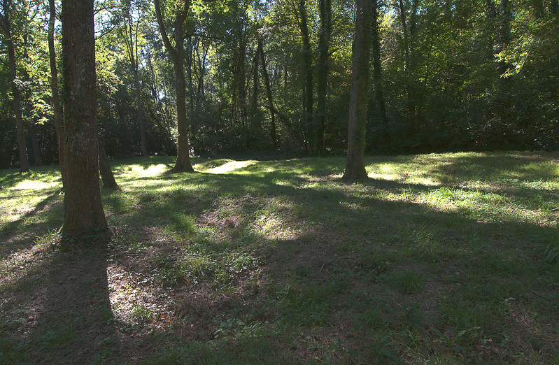 These are remains of German trenches with young trees.<br /> <br /> Local mills will not take trees that might have been standing in 1918. Referred to as Veterans, they are full of bullets and shrapnel.