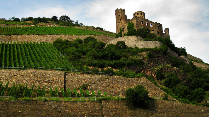 Ehrenfels Castle Ruins on the Rhine, Germany.