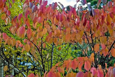 """""""Autumn leaves-Tallinn, Estonia""""."""