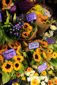 Edinburgh Market Flowers - Scotland