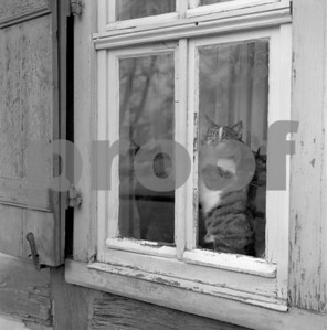 Cats window Germany 011271