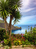 Island of Madeira Portugal_2213IP copy