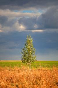 Lonesome tree in farmland near Penza, Russia