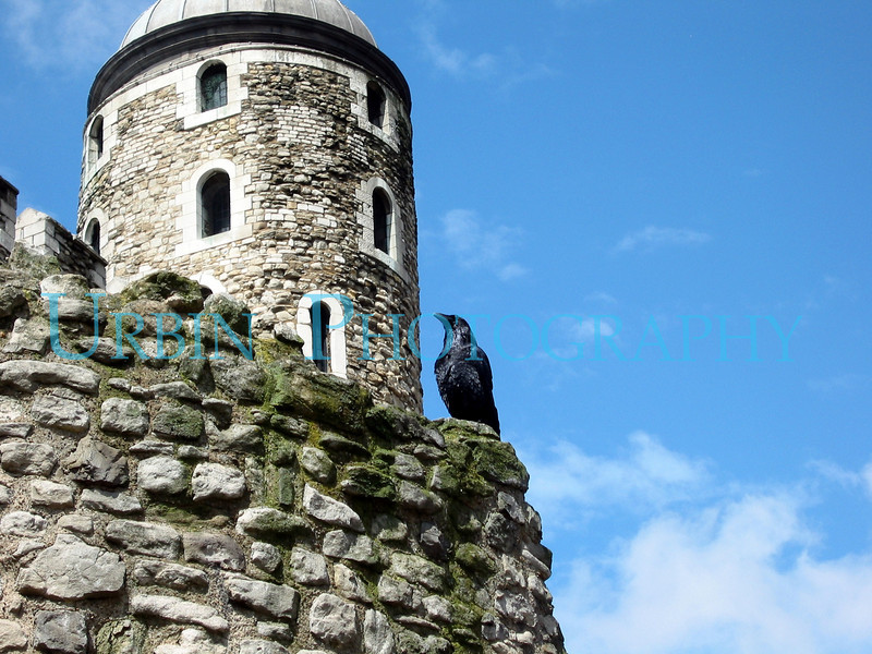 One of the Tower of London's Ravens.  The tower is the oldest tower, and wall is from a Roman fort that predates the Castle.