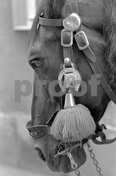 Horse Leica Wetzlar