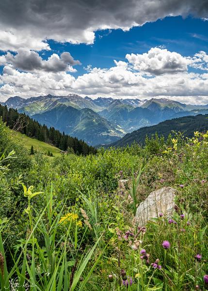 Wildflowers (Tyrol)