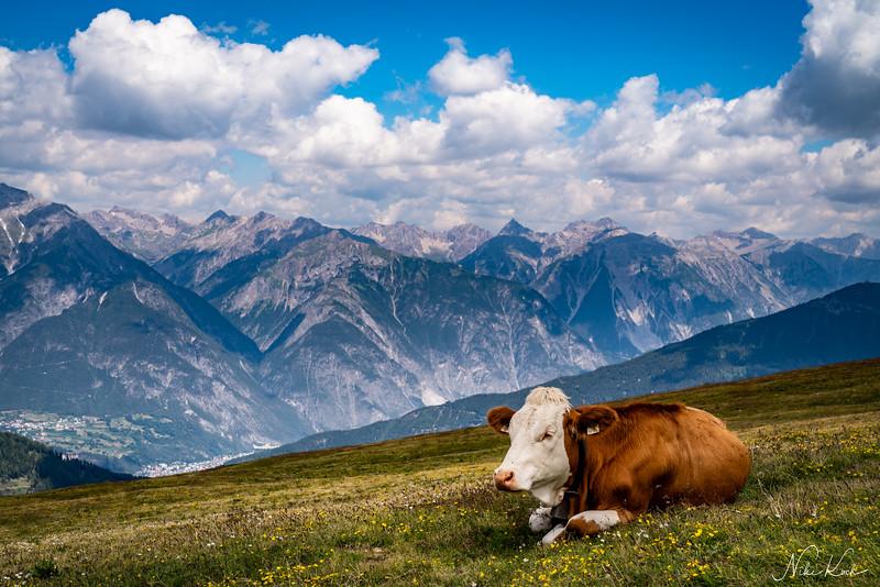 Apline Cow (Tyrol)