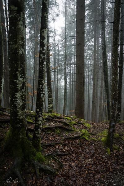 Neuschwanstein Woodland (Bavaria)