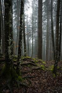 BAYERN: Neuschwanstein Woodland