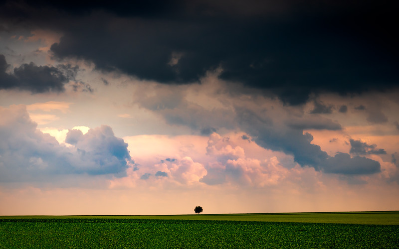 Lone Tree & Storm Clouds