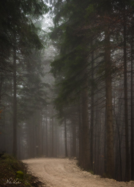 Misty Woodland (Bavaria)