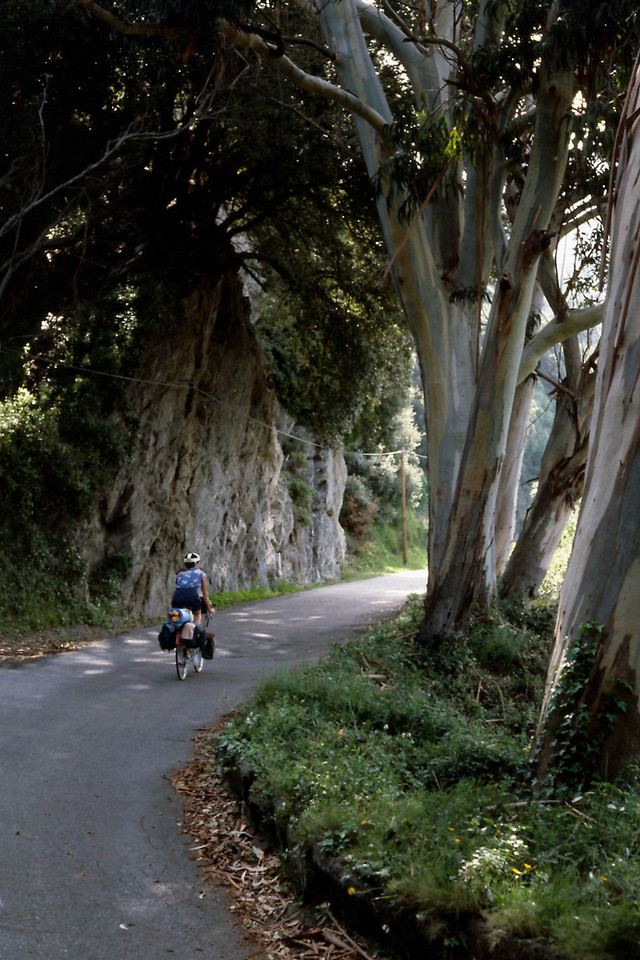 Rita, cycling beneath eucalyptus trees.