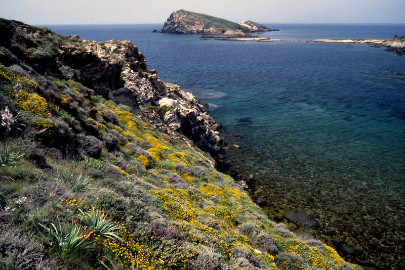 Corsican Coast<br /> <br /> Wild flowers galore beside the road mad ordinary breathing a religious experience.