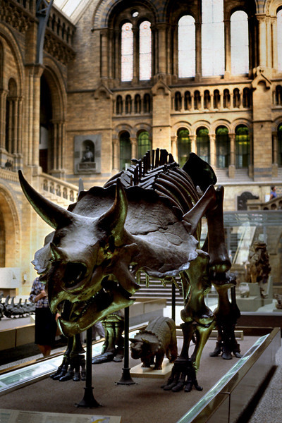 Dinosaur - Natural History Museum<br /> <br /> Day 88 - July 7 - London - 0 miles by bike - The Hotel George, mercifully, gave us a choice between Continental or Traditional English for breakfast, so we were able to avoid the dreaded morning grease-out. <br /> <br /> A short walk in the warm sunshine took us to the Natural History Museum, just in time for the 10:00 opening (free!). We drifted for hours from display to display of gems and minerals, dinosaurs and stuffed birds, all attractively displayed, if somewhat dimly lit.